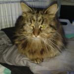 chat à adopter Jilianne