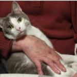 CEM chats perdus trouvés Minou