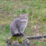 CEM chats perdus trouvés Petit Gris