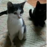 CEM chat adoption Deux soeurs