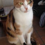 CEM chats perdus trouvés Isabelle