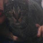 CEM chats perdus trouvés Lorine