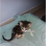 CEM chat adoption Miette
