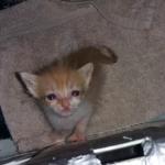 chat à adopter Miaou