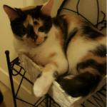 CEM chats perdus trouvés KIMO