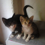 CEM chat adoption Marquis et Manuela