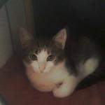 chat à adopter Minidou