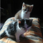CEM chat adoption Missy et Milos